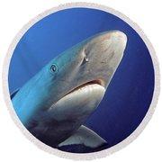 Gray Reef Shark Round Beach Towel