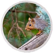 Gray Squirrel Pictures 93 Round Beach Towel