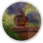 Munching Squirrel Round Beach Towel