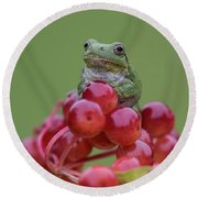 Gray Tree Frog Round Beach Towel
