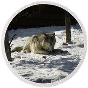 Gray Wolf 2 Round Beach Towel