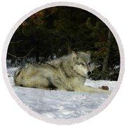 Gray Wolf 5 Round Beach Towel