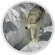 Gray Wolf 7 Round Beach Towel