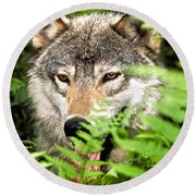 Gray Wolf In The Woods Round Beach Towel