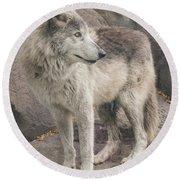 Gray Wolf Profile Round Beach Towel