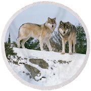 Gray Wolves Canis Lupus In A Forest Round Beach Towel