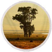 Grazing Around The Tree Round Beach Towel