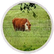 Grazing Cow Round Beach Towel