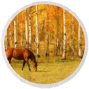 Grazing Horse In The Autumn Pasture Round Beach Towel