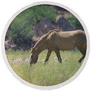 Grazing Wild Mustang  Round Beach Towel