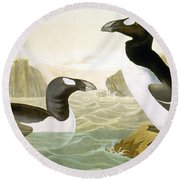Great Auk (alka Impennis): Round Beach Towel
