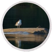 Great Black-backed Gull  Round Beach Towel