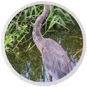 Great Blue Heron Closeup Round Beach Towel