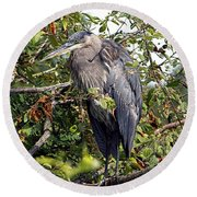 Great Blue Heron In A Tree Round Beach Towel