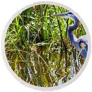 Great Blue Heron In The Wetlands Round Beach Towel