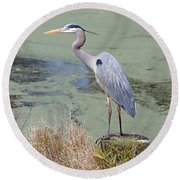 Great Blue Heron Near Pond Round Beach Towel