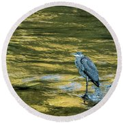 Great Blue Heron On A Golden River Round Beach Towel