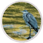 Great Blue Heron On A Golden River Vertical Round Beach Towel