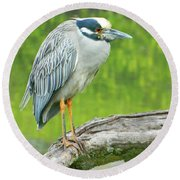 Great Blue Heron On Little Sarasota Bay Round Beach Towel