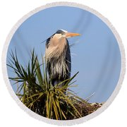 Great Blue Heron On Nest In A Palm Tree Round Beach Towel