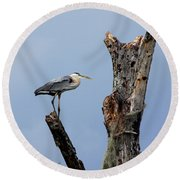Great Blue Heron Perched Round Beach Towel