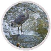 Great Blue Heron Standing In Stream Round Beach Towel