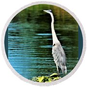 Great Blue Heron Standing Tall Round Beach Towel