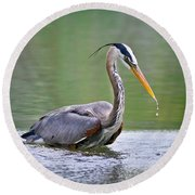 Great Blue Heron Wading Round Beach Towel