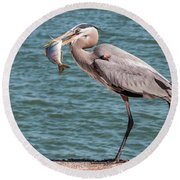 Great Blue Heron Walking With Fish #2 Round Beach Towel