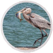 Great Blue Heron Walking With Fish #3 Round Beach Towel