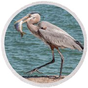 Great Blue Heron Walking With Fish #4 Round Beach Towel
