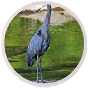 Great Blue Wading The Tuck Round Beach Towel
