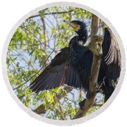 Great Cormorant - High In The Tree Round Beach Towel