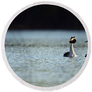 Great Crested Grebe Round Beach Towel