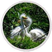 Great Egret Chicks 1 Round Beach Towel