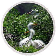 Great Egret Chicks 2 Round Beach Towel