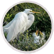 Great Egret Mom And Babies Round Beach Towel