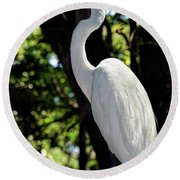 Great Egret Up Close Round Beach Towel