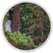 Great Gray Owl Perched Round Beach Towel