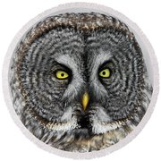 Great Gray Owl Portrait Round Beach Towel