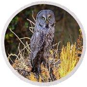 Great Grey Owl Portrait Round Beach Towel