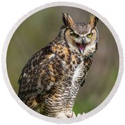 Great Horned Owl Screeching Round Beach Towel