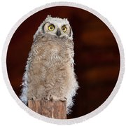 Great Horned Owlet Round Beach Towel