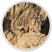 Great Horned Owlet Two Round Beach Towel