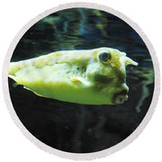 Great Longhorn Cowfish Swimming Along Underwater Round Beach Towel