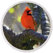 Great  Perch Male Northern Cardinal Round Beach Towel