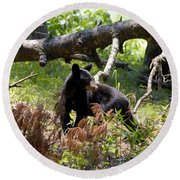 Great Smoky Mountain Bear Round Beach Towel