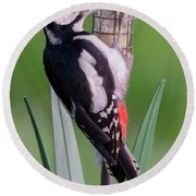 Great Spotted Woodpecker 1  Round Beach Towel