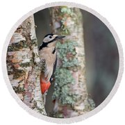 Great Spotted Woodpecker Round Beach Towel