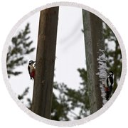 Great Spotted Woodpeckers Round Beach Towel